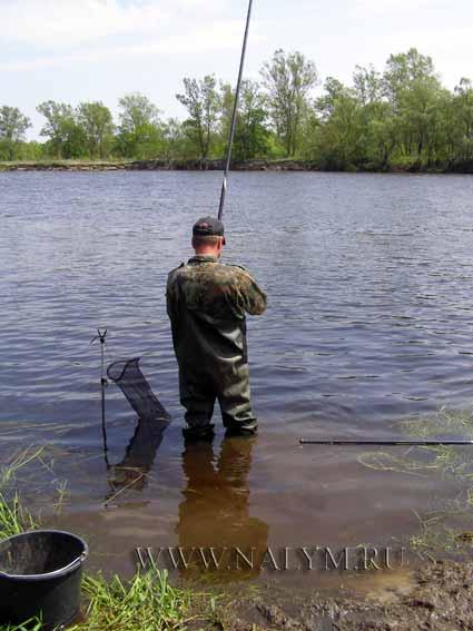 прогноз клева рыбы в переславле залесском на неделю