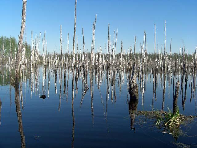 рыбалка на ольховском озере