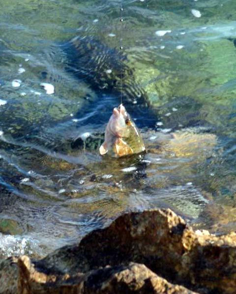 рыбалка на эгейском море
