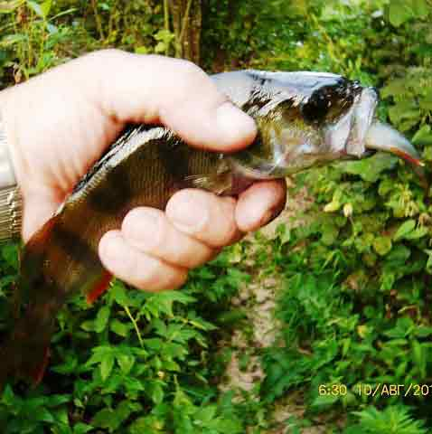 рыбалка с боевыми