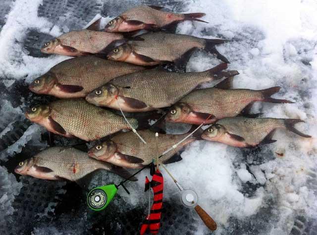 ловля леща на озернинском водохранилище видео